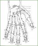 Akupunktúrás pontok kézen